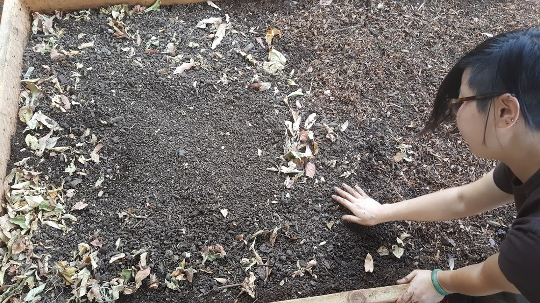 how to use worm castings in gardening